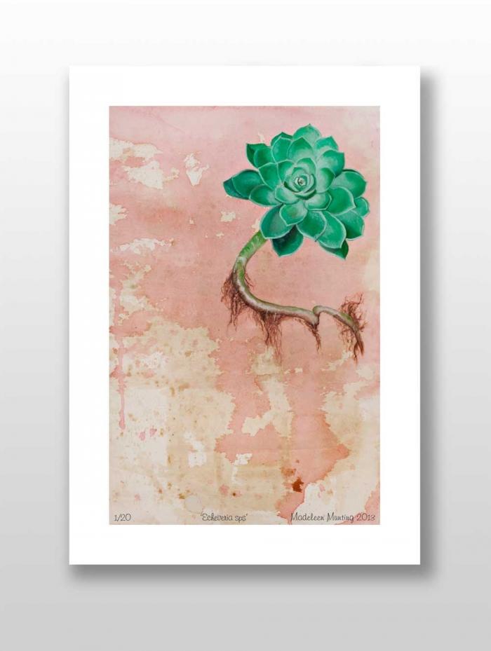 Botanical_Illustration_plain_1