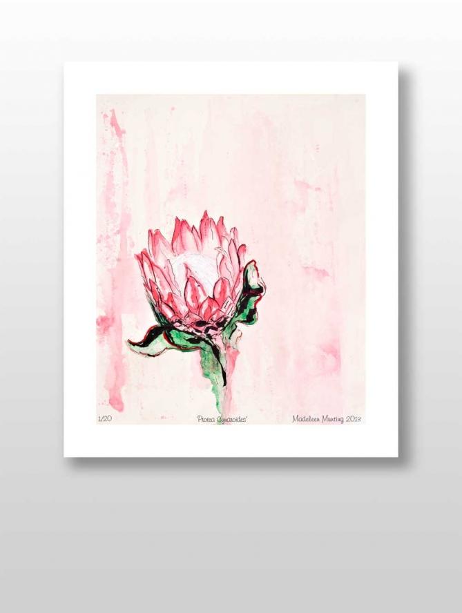 Botanical Illustration 02 – Protea Cynaroides